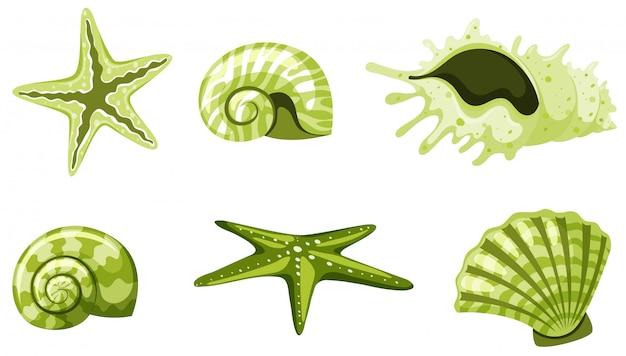 Set van geïsoleerde zeeschelpen in groene kleur