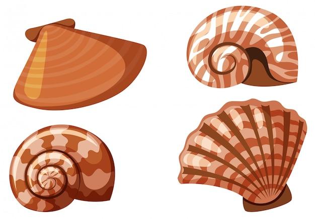 Set van geïsoleerde zeeschelpen in oranje kleur