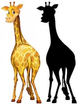 Set van giraffe en zijn silhouet