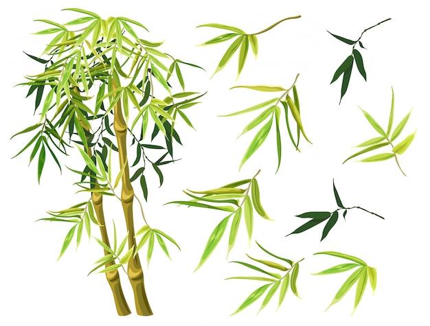 Set van groene bamboe stengels en bladeren.