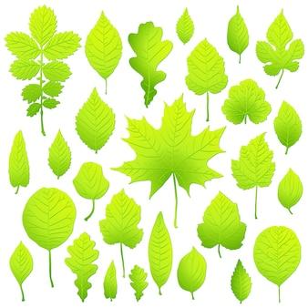Set van groene bladeren geïsoleerd op een witte achtergrond