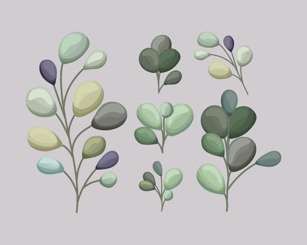 Set van groene bladeren schilderij ontwerp van floral natuur plant tuin ornament plantkunde decoratie en leven thema illustratie