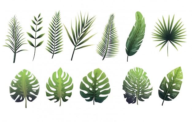 Set van groene bladeren van varens, tropische bomen.