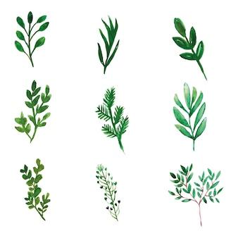 Set van groene bladeren voor kaartversieringen