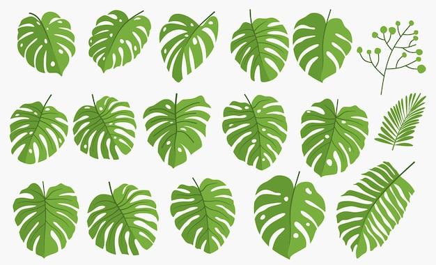 Set van groene monstera