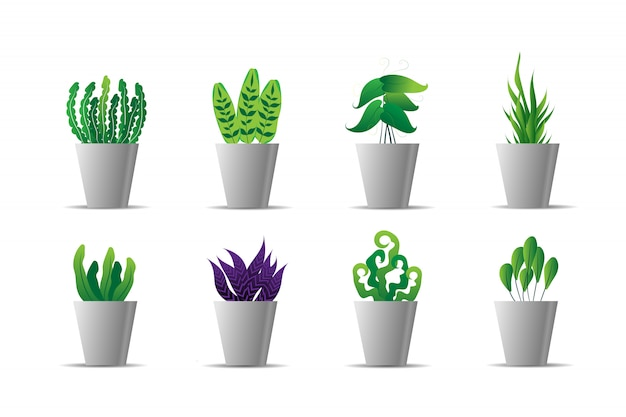 Set van groene plant in witte pot