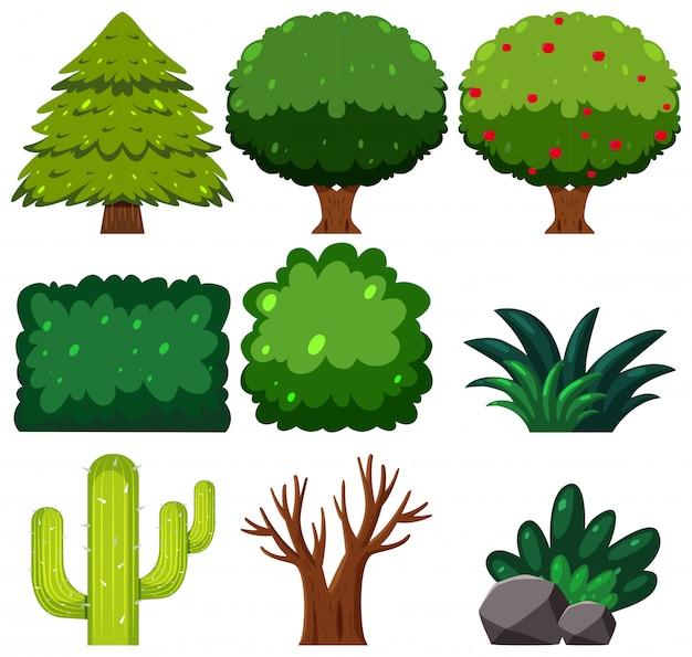 Set van groene plant