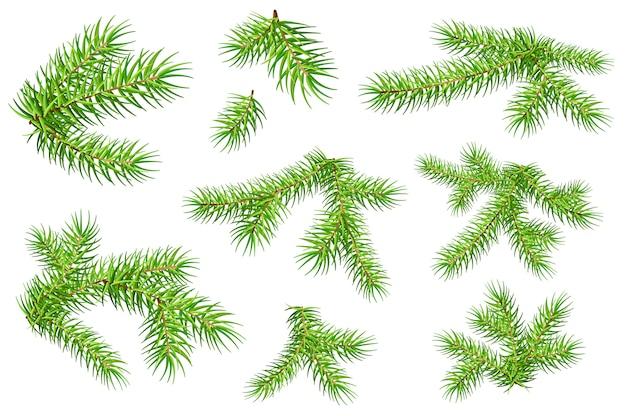 Set van groene pluizige spar pijnboomtakken geïsoleerd op een witte achtergrond
