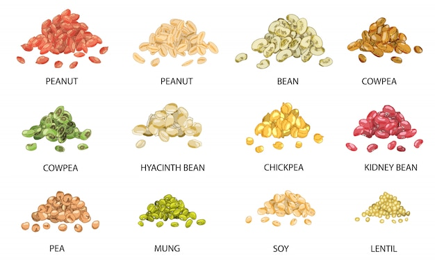Set van hand getrokken gekleurde stapels bonen zaden.