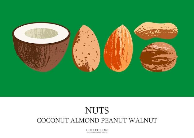 Set van heerlijke en gezonde noten. kokosnoot, amandelen, walnoten, pinda's. vectorillustratie met unieke handgetekende textuur