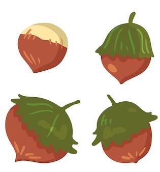 Set van herfst oogst. vectorillustraties van het herfstseizoen. tekeningen van verschillende bosnoten, hazelnoten. cartoon gekleurde cliparts collectie geïsoleerd op wit. voor decor, ontwerp