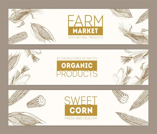 Set van horizontale banners met realistische kolven van suikermaïs of maïskolven hand getekend met contourlijnen op witte achtergrond