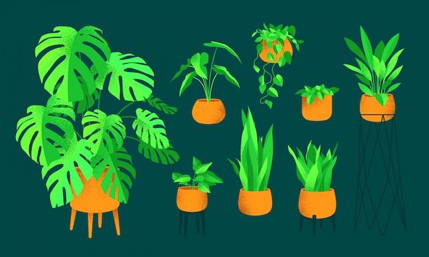 Set van huisplanten