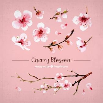 Set van kersenbloesems en waterverf tak