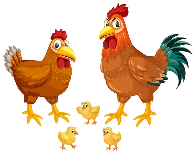 Set van kippen witte achtergrond