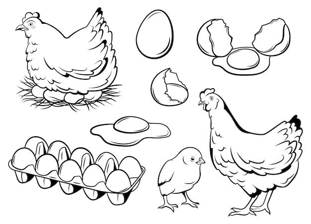 Set van kippeneieren. ? ollection van kip met haar baby. landelijke natuurlijke pluimveehouderij.