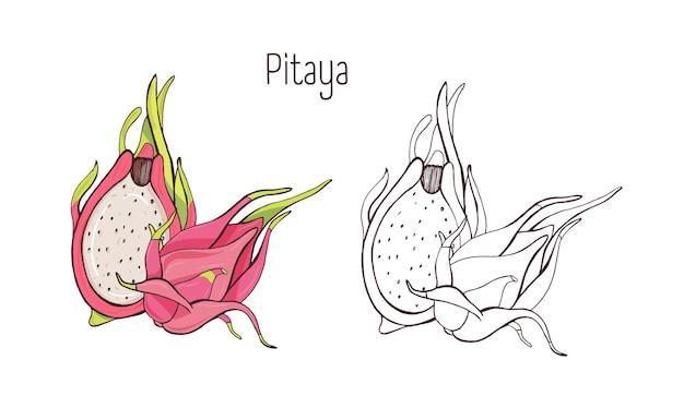 Set van kleurrijke en zwart-wit overzichtstekeningen van hele en gesneden pitaya, pitahaya of dragon fruit geïsoleerd op een witte achtergrond