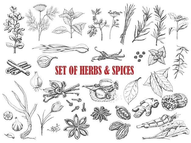Set van kruiden en specerijen in schets stijl