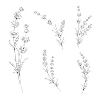 Set van lavendel bloemen.