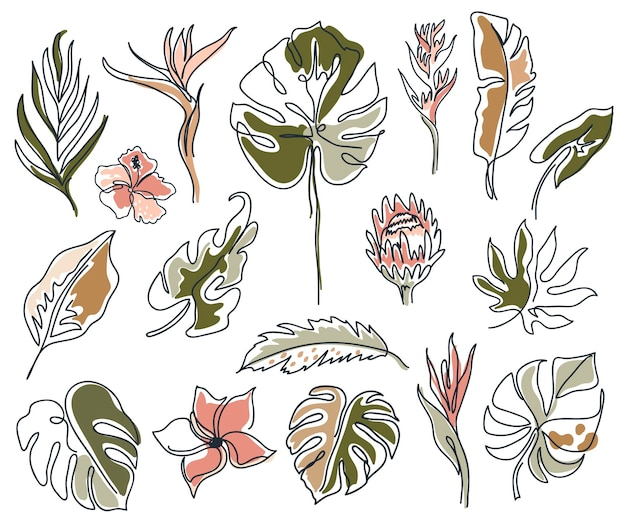 Set van lineaire verschillende bloemen, monstera bladeren en andere bladeren.