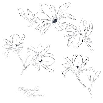 Set van magnolia bloemen op witte achtergrond in lijn kunststijl