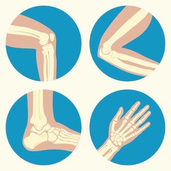 Set van menselijke gewrichten kniegewricht ellebooggewricht enkelgewricht pols