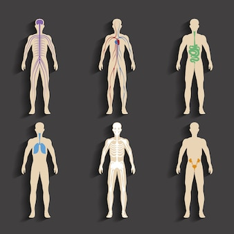 Set van menselijke organen en systemen van de vitaliteit van het lichaam. vector illustratie