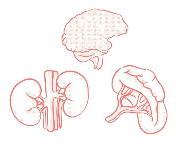Set van menselijke organen illustratie voor ontwerpelement