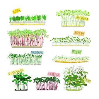 Set van microgreens geïsoleerd