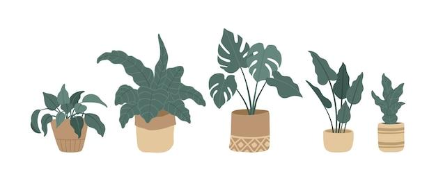 Set van moderne kamerplanten hand getrokken bloemen in potten