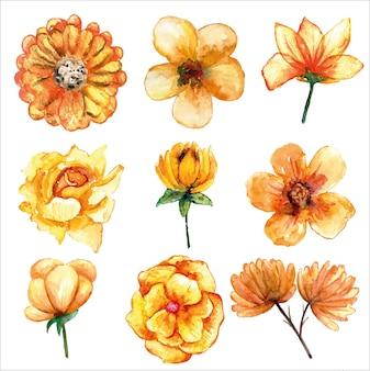 Set van mooie gele bloem