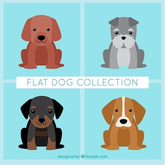 Set van mooie puppies