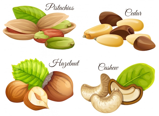 Set van noten hazelnoot, cashewnoten, ceder, pistachenoten.