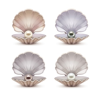 Set van open schelp met beige, grijze, bruine en witte parels erin. sjabloon van geopende schelpen geïsoleerd op de achtergrond