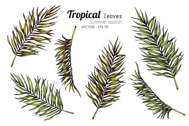 Set van palm blad tekening illustratie