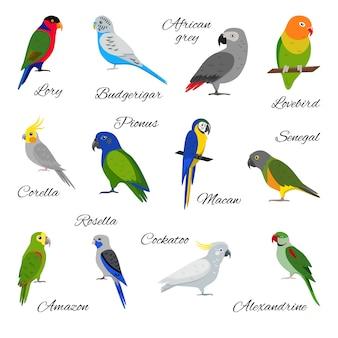 Set van papegaai iconen
