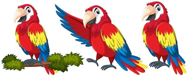 Set van papegaaien karakter
