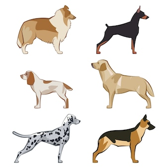 Set van platte zitten of lopen leuke cartoon honden en honden. populaire rassen. vlakke stijl ontwerp geïsoleerd. vector illustratie.