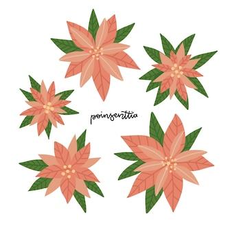 Set van poinsettia bloemen. hand getrokken kerst traditionele planten collectie. nieuwjaarsvakantie scandinavische elementen. vector platte nhand getekende illustratie geïsoleerd op een witte achtergrond.