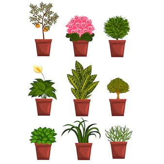 Set van pot bladverliezende, bloeiende, fruitplanten met bloemen en bladeren. anthurium, mandarijn, violet, bonsai, pipal. home natuurlijke elementen. op wit. Premium Vector