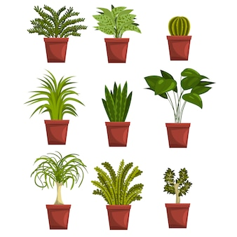 Set van pot groene bladverliezende planten met bladeren. sansevieria, cactus, pipal, bonsai, palmboom. kamerplanten. tuinieren hobby. op wit