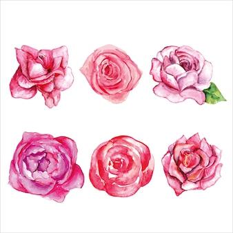 Set van prachtige bloemen roze roos Premium Vector