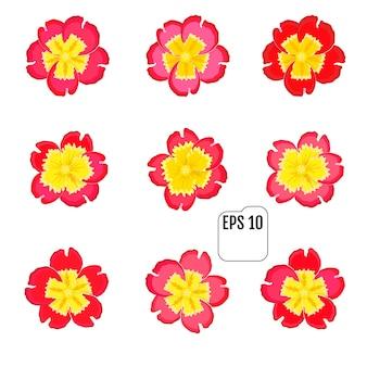 Set van primrose bloesem lente bloemen iconen.