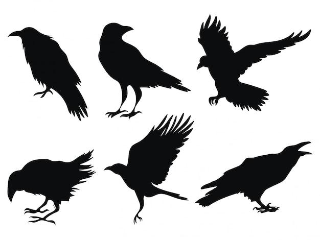 Set van raven. een verzameling zwarte kraaien. silhouet van een vliegende kraai.
