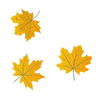 Set van realistische esdoornbladeren geïsoleerd op een witte achtergrond.