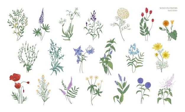 Set van realistische gedetailleerde kleurrijke tekeningen van wilde weidekruiden, kruidachtige bloeiende planten, mooie bloeiende bloemen geïsoleerd op een witte achtergrond. hand getekend botanische vectorillustratie.