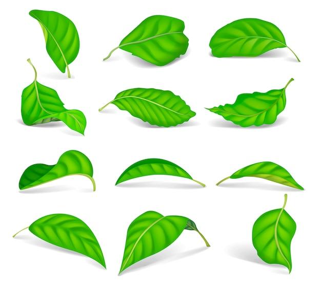 Set van realistische groene theebladeren op wit wordt geïsoleerd