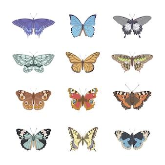 Set van realistische tederheid vlinder