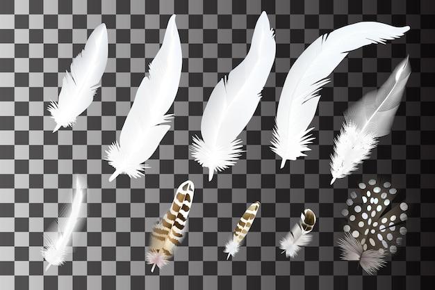 Set van realistische veren