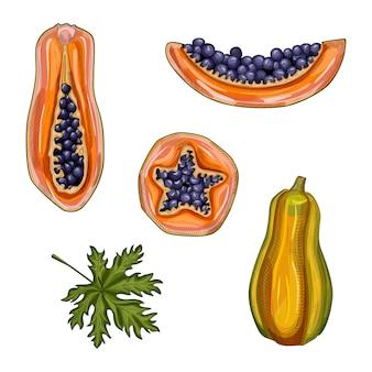 Set van rijpe papaja. hand getekend papaja zomerfruit. hele, halve en plak papaja.